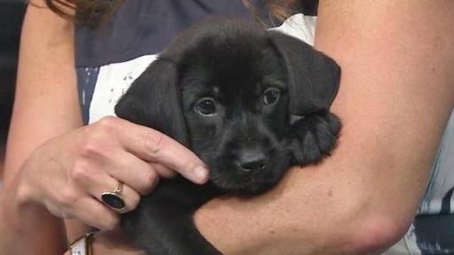 Aug. 22, 2014 Pet of the Day