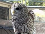 NC Zoo: Animal ambassadors
