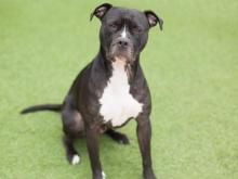 Sally is a 3-year-old female available at the Wake SPCA.