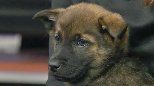 March 27, 2015 Pet of the Day