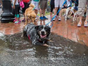 SPCA of Wake County K9-3K walk