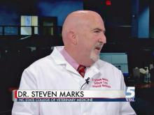 Vet: High heat is especially dangerous for pets