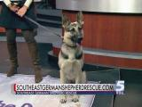Oct. 3, 2015 Pet of the Day