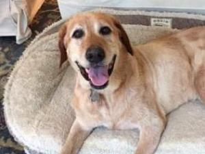 A Tarboro family was reunited with their 9-year-old dog Brinkley after they believed he was dead for months, thanks to a local rescue group and WRAL's Pet of the Day segment.