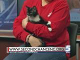 Nov. 21, 2015 Pet of the Day