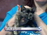 Nov. 23, 2015 Pet of the Day