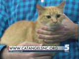 Nov. 25, 2015 Pet of the Day