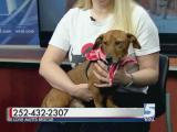 Pet of the Day Nov. 29