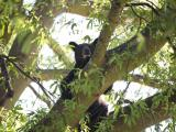 Bear in tree in Roanoke Rapids