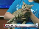 June 27, 2016 Pet of the Day