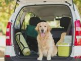 Traveling with pets? Bring water, restrain animals