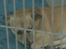 8 animal shelters waive adoption fees for 'Clear the Shelters'