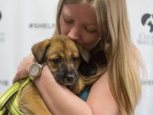 Several animal shelters in the Triangle partnered with WRAL to find homes for 670 local animals during the nationwide Clear the Shelters campaign.