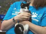 Sept. 26 Pet of the Day