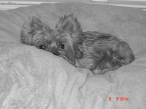 Photo by: Susan Whitley. My little girl Roxie