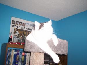 Photo by: Bryan, Heather & Shania. Pretty Kitty