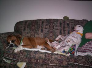 Photo by: Kathy and Mark Williamson. We need a bigger Couch!
