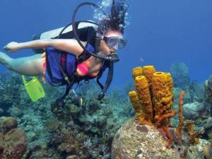 Scuba diving is among the most popular eco-conscious activities available in Belize.