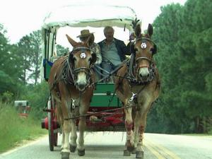 Traveling by mule to Mule Days