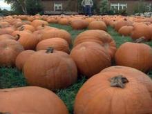 Tar Heel Traveler Halloween Special