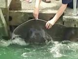 Families flock to pet friendly stingray