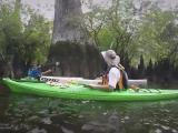 Three Sisters Swamp is world'd oldest cypress swamp