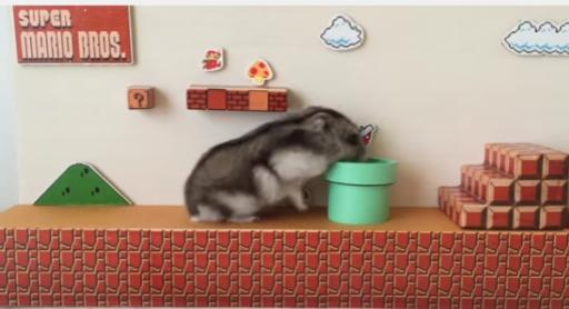 Super Mario Brothers fans, unite! A YouTuber in Japan created a real-life Mario level for their pet hamster to run. (Deseret Photo)