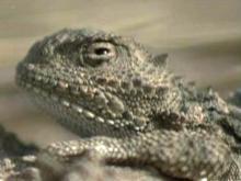 Lizard hunting teaches children