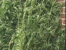 Drug Agents Make Million Dollar Pot Bust