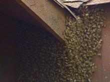 Bees Set Fayetteville Home Abuzz