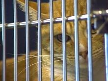 Wake Animal Shelter Cuts Back on Hours, Services Due to Staffing Shortage