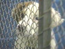 Humane Society Suggests Immediate Changes be Made at Animal Shelter