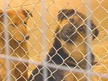 Time and space are running out for Moore County's only animal shelter. Shelter officials say they may soon have to turn animals away.(WRAL-TV5 News)