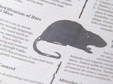 Orange County Neighborhood Asks For State's Help In Solving Rat Infestation