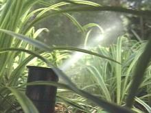 Cary Begins Outdoor Water Rationing
