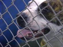 Fayetteville Police Make Dogfighting Arrests