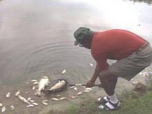 Thousands of Fish Found Dead At Indian Lake