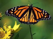 DOT Uses Flowers to Net Butterflies