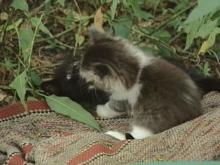 Some Garner Cats Dying Mysteriously