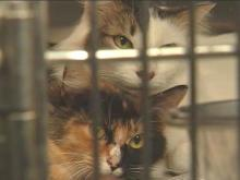 Cary Police and Wake County Animal Control found 15 cats, both dead and alive, at a Cary trailer. The owner now faces criminal charges for misdemeanor animal cruelty.(WRAL-TV5 News)