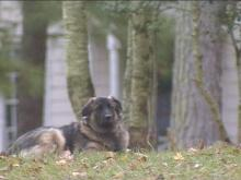 According to a Cary ordinance, residents are only allowed to have two dogs. Even though the ordinance is rarely enforced, they want it off the books.(WRAL-TV5 News)