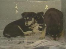 The cold weather is creating an uncomfortable situation for pets at a local animal shelter.(WRAL-TV5 News)
