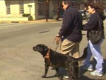 Woman Ordered To Write Book Report After Refusing To Allow Guide Dog Into Restaurant