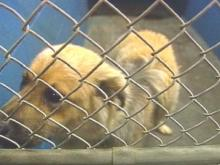 Cumberland County Commissioners Scrap Plan For New Animal Shelter