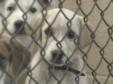 Wilson Board Rejects Plan To Raise Pet Adoption Fee