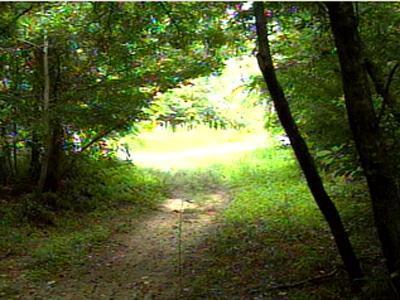 Bent Creek Trail
