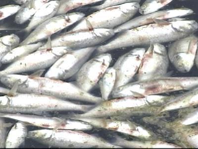 Heat Kills Hundreds Of Fish In Cary Lake