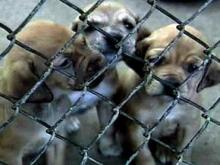 Sheriff Takes Control of Wilson Animal Shelter