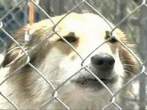 Animal Shelter Faces Expansion Questions