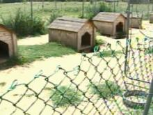 Dozens of Dogs Rescued From 'Puppy Mill'